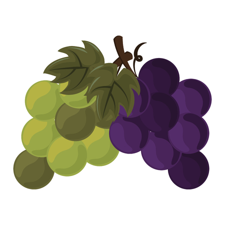 thanksgiving day fruit grapes in white background vector illustration graphic design
