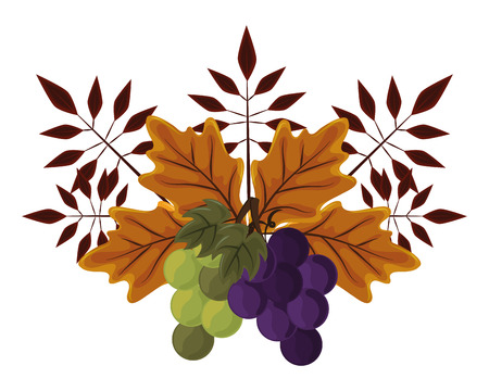 thanksgiving day autumn leaves with grapes in white background vector illustration graphic design