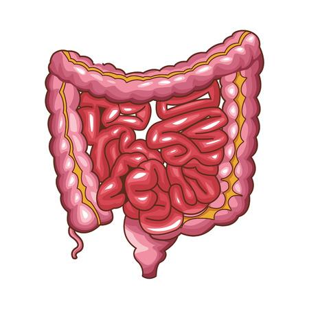 Diseño gráfico del ejemplo del vector de la historieta del órgano humano de la anatomía