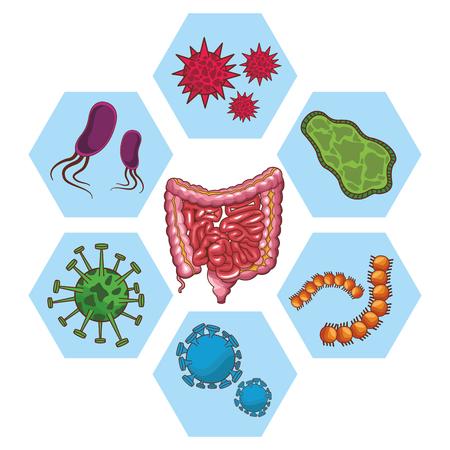 anatomia organo umano fumetto illustrazione vettoriale graphic design