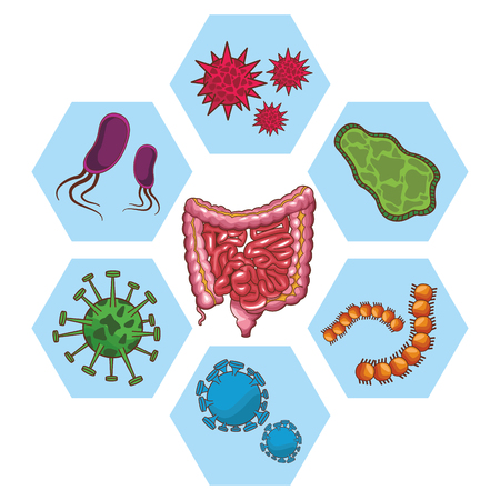 anatomy human organ cartoon vector illustration graphic design