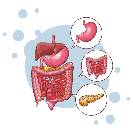 digestive system parts vector illustration graphic design Illustration