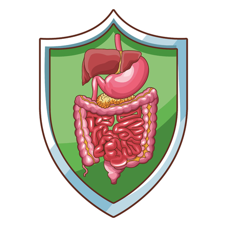 digestive system well working vector illustration graphic design