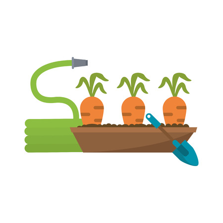 Garden with Carrots harvest and hose with shovel vector illustration graphic design