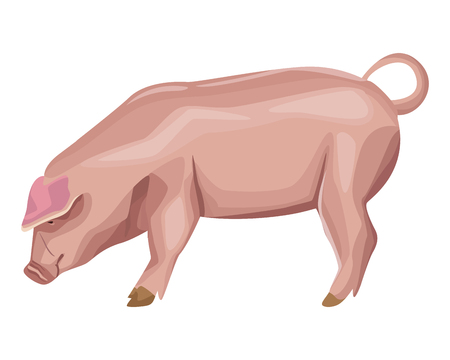 pig icon cartoon isolated vector illustration graphic design 向量圖像