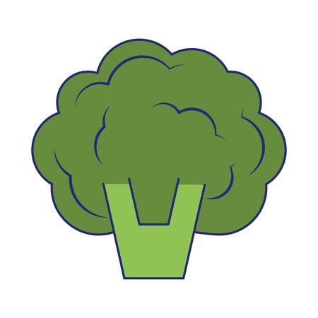 Broccoli fresh vegetable isolated vector illustration graphic design