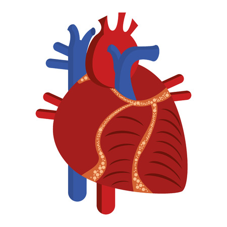 Human heart cartoon isolated vector illustration graphic design