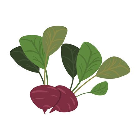 Radishes vegetables food cartoon vector illustration graphic design Ilustrace