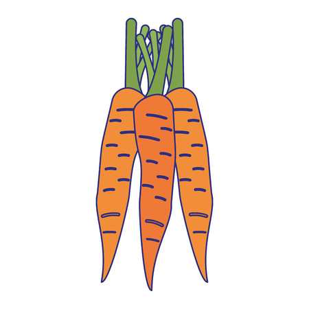 Carrots vegetables food isolated vector illustration graphic design