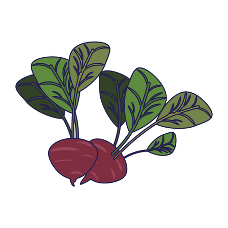 Radishes vegetables food cartoon vector illustration graphic design Vettoriali