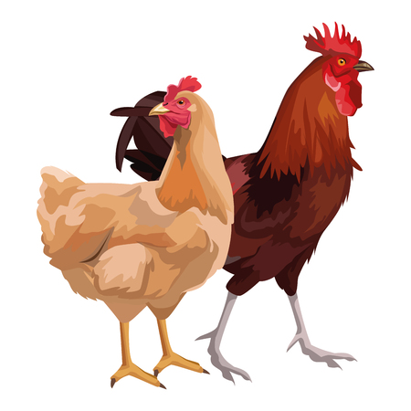 hen and rooster icon cartoon vector illustration graphic design  イラスト・ベクター素材