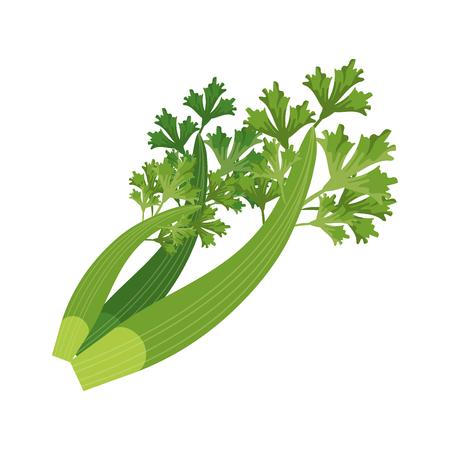 Coriander leaves fresh isolated vector illustration graphic design