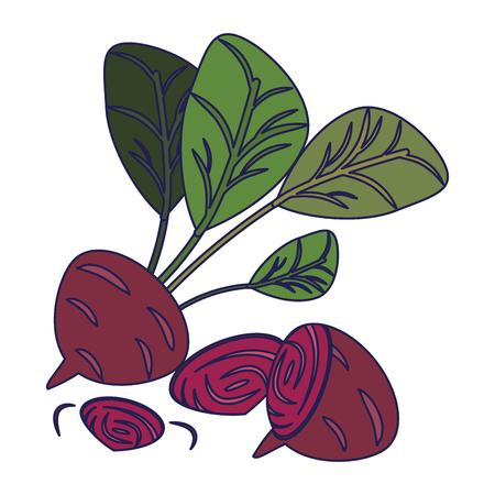Radish and onions vegetables vector illustration graphic design