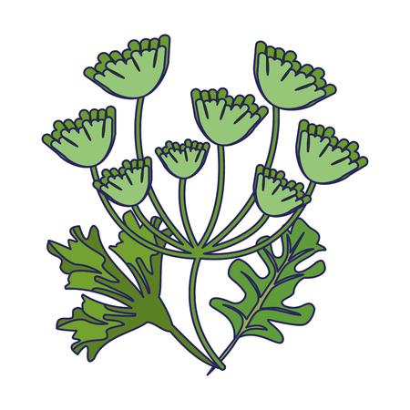 parsley and coriander leaves vector illustration graphic design Stock Illustratie
