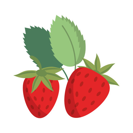 strawberries fruit fresh food isolated vector illustration graphic design