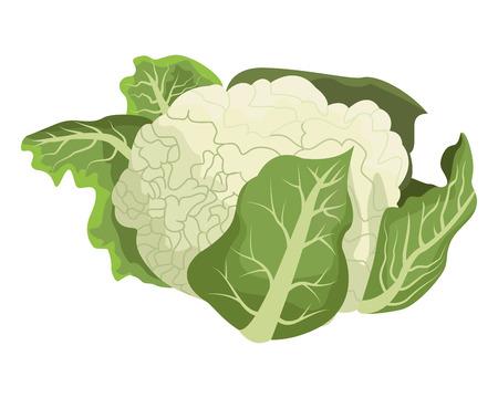 cauliflower icon cartoon isolated vector illustration graphic design