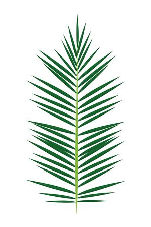 leaf icon cartoon vector illustration graphic design
