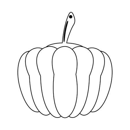 Pumpkin fresh vegetable food vector illustration graphic design