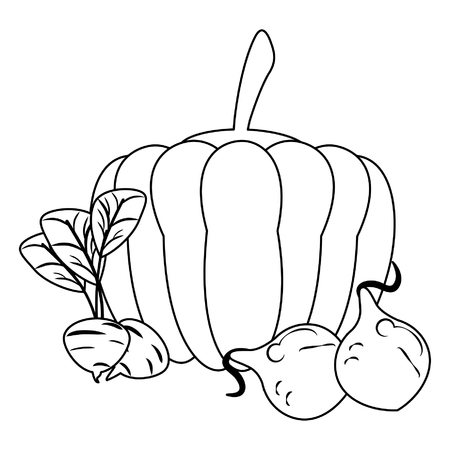 Pumpkin and radish with onions vector illustration graphic design