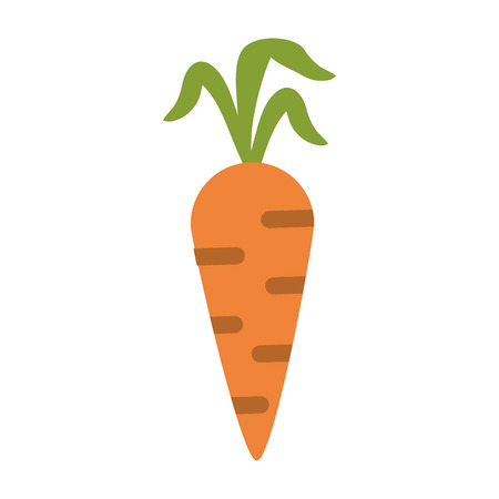 Carrot vegetable food isolated vector illustration graphic design Illustration