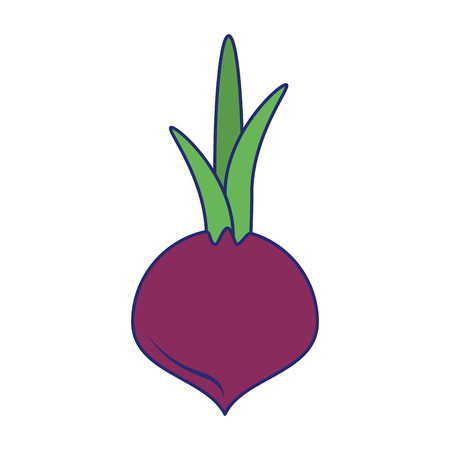 Onion fresh vegetable isolated vector illustration graphic design