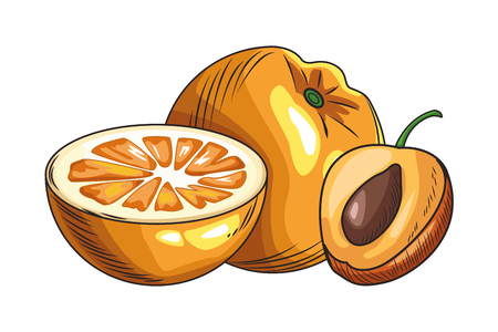 Fresh fruit nutrition healthy grouped colorful orange and peach fitness diet options drawing vector illustration graphic design Ilustração