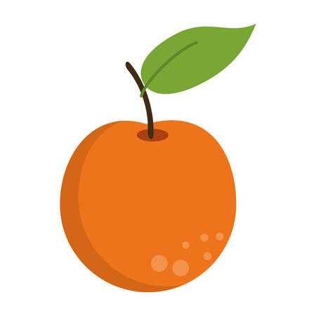 Orange fruit fresh food isolated vector illustration graphic design Stock Illustratie