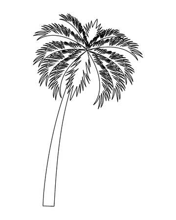 Tropical vegetation vacation and exploration beach palm tree nature black and white vector illustration graphic design