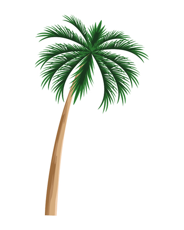Tropical vegetation vacation and exploration beach palm tree nature isolated vector illustration graphic design Stock Illustratie