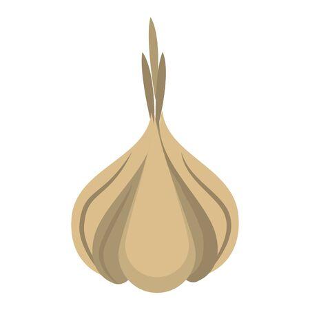 Garlic fresh vegetable healthy food vector illustration graphic design