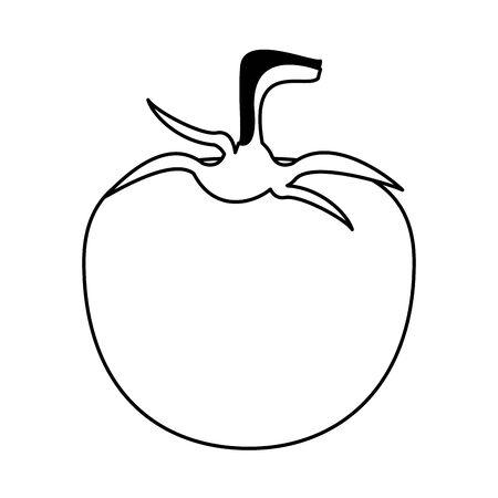 Tomato fresh vegetable food cartoon vector illustration graphic design