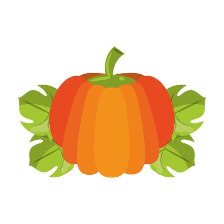 Pumpkin on leaves fresh vegetable healthy food vector illustration graphic design Illustration
