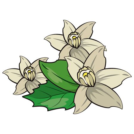 Flowers and leaves nature drawing isolated vector illustration graphic design