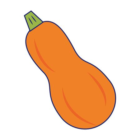 zucchini fresh vegetable isolated vector illustration graphic design