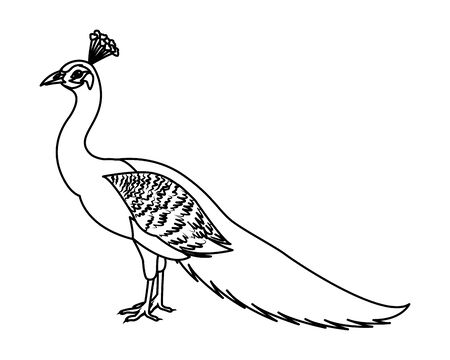 peacock bird icon cartoon isolated in black and white vector illustration graphic design