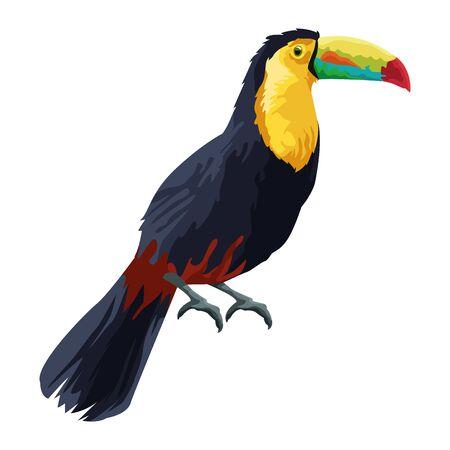 beautiful wild birds toucan icon cartoon vector illustration graphic design