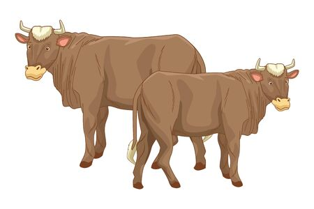 Two cows animals cartoons isolated vector illustration graphic design