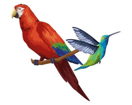 beautiful wild birds macaw over a branch and a hummingbird icon cartoon vector illustration graphic design  イラスト・ベクター素材