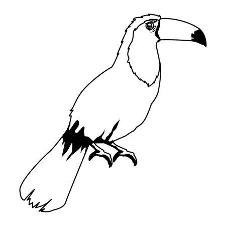 beautiful wild birds toucan icon cartoon in black and white vector illustration graphic design Illustration