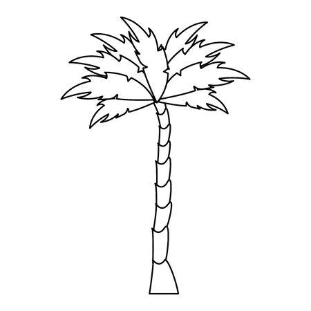 nature palm tree environment cartoon vector illustration graphic design