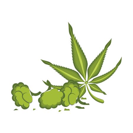 cannabis martihuana medical marijuana sativa hemp plant with buds cartoon vector illustration graphic design