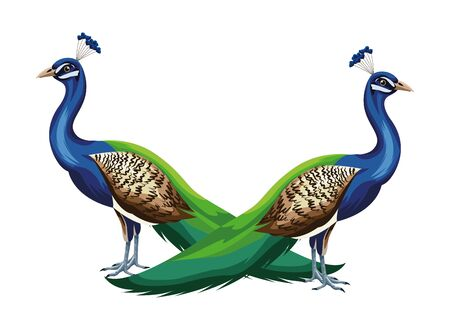 peacock bird icon cartoon isolated vector illustration graphic design Illusztráció