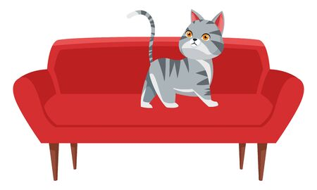 domestic animals and pet with cat over a couch icon cartoon vector illustration graphic design