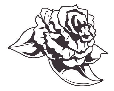 rose drawn in black and white icon vector illustration graphic design