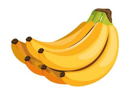exotic tropical fruit banana cluster icon cartoon vector illustration graphic design