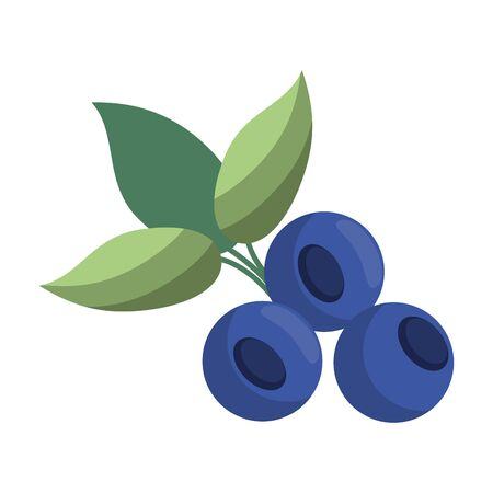 blueberries fruit fresh food isolated vector illustration graphic design Иллюстрация