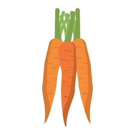 Carrots vegetables food isolated vector illustration graphic design Фото со стока - 130810005