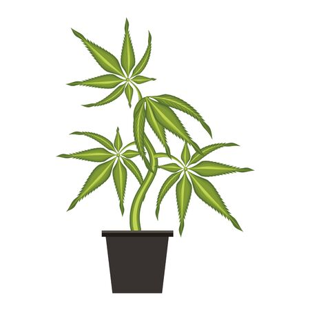 cannabis martihuana medical marijuana sativa hemp plant cartoon vector illustration graphic design
