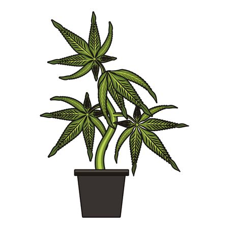 cannabis martihuana medical marijuana sativa hemp plant cartoon vector illustration graphic design