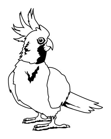 parrot wild cockatoo icon cartoon isolated in black and white vector illustration graphic design Stok Fotoğraf - 132696385